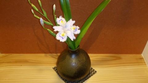 今日の花はシャガ。花言葉は「しゃがらっしゃい!」 花言葉に似合わず可憐です。