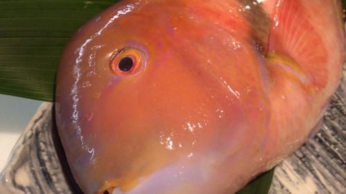 変な顔やけど綺麗な魚です