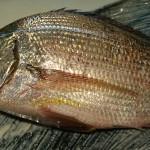 阿久根から来る魚 ヘダイ(白チン)