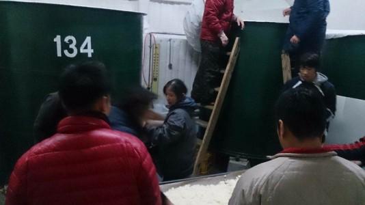 タンクに掛け米を入れるスタッフと蔵人